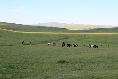 草原で馬を放牧する遊牧民