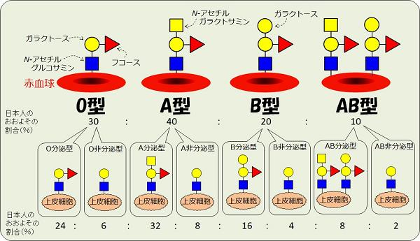 ABO血液型