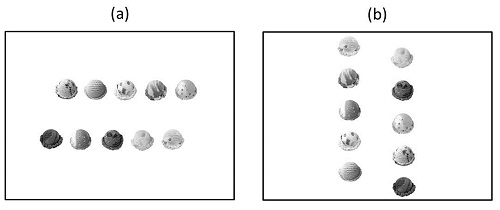 研究で用いた水平陳列と垂直陳列の例