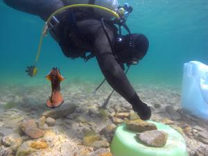 海底湧水調査