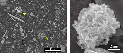 図2 海底堆積物に含まれる微小マンガン粒の走査電子顕微鏡写真