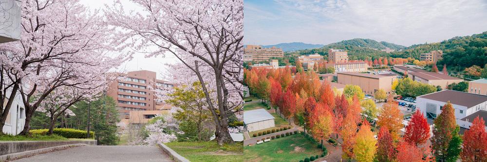 四季が楽しめるキャンパスは歩いていて楽しい