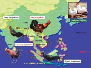 ニワトリの祖先種であるヤケイの分布図