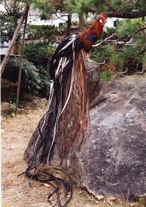 日本国特別天然記念物「土佐のオナガドリ」雄(赤笹内種)