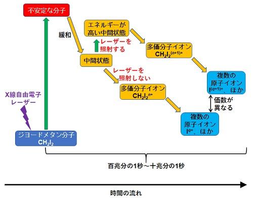 X線照射によって起こる一連の過程の模式図