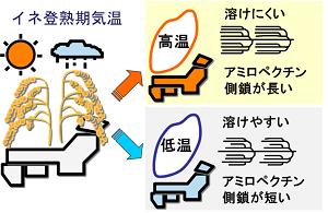 イネ登熟期気象データからの原料米酒造適性の予測