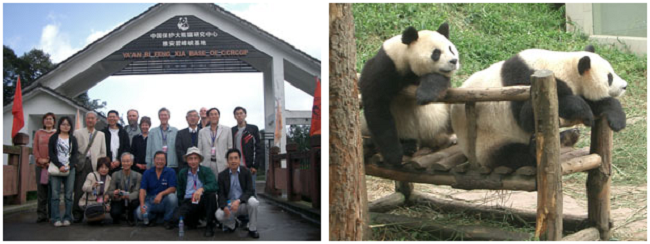 四川省のパンダ保護研究センターにて