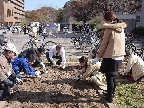 チューリップ球根の植え付け作業を行いました