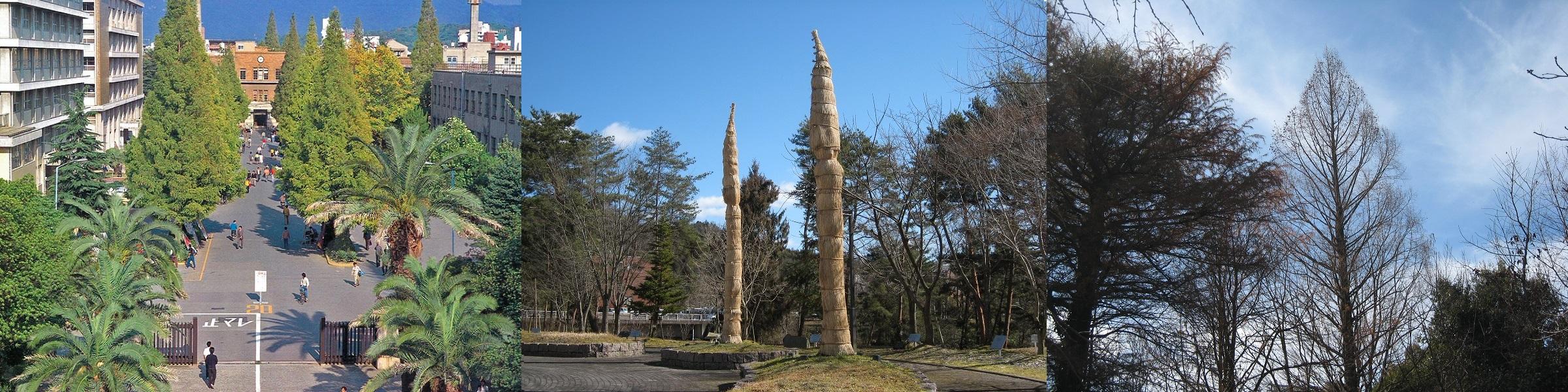 広島大学の象徴となる樹木