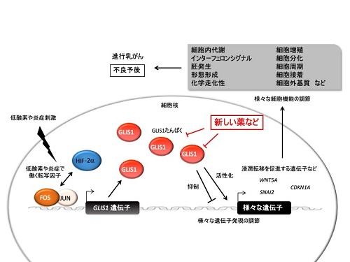 まとめの概念図