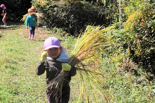 みんなで協力して稲を運びました