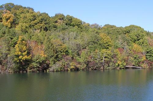 木々が色づき始めた山中池