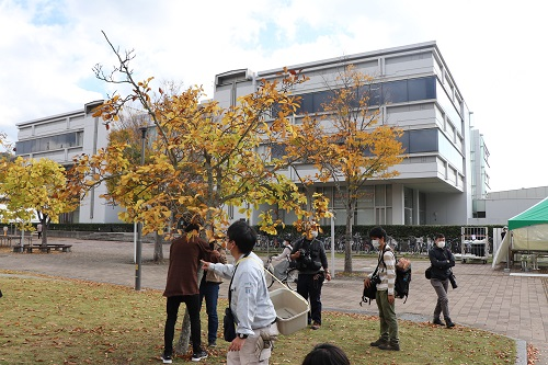 中央図書館前の「ケヤキ」