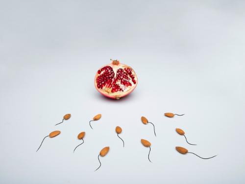 restoring fertility through spermatogonial stem cell transplant