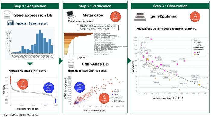 Schematic view of hypoxic transcriptome meta-analysis