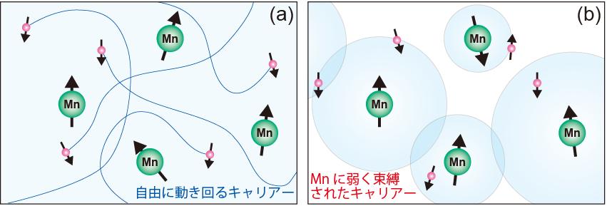 図2 Ga1-xMnxAsで提唱されている強磁性発現モデル