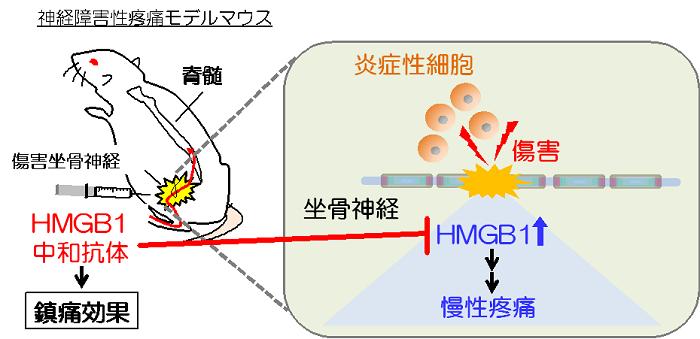 図2. 本研究の概略図