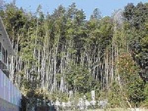 近年の里山(東広島市)の風景。手入れされず、どんどん周辺の森林に拡大する竹林