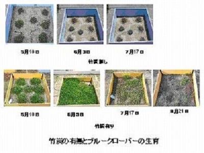 大学屋上での植物生育実験