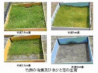 竹炭を敷く厚さを変えて、竹炭を敷かなかった場合と芝の生育状況を比較