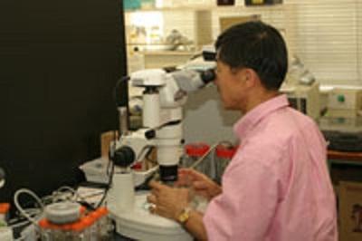 世界初のエチゼンクラゲ人工繁殖に 成功した実験室にて