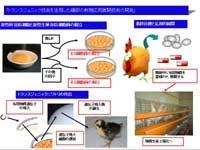 トランスジェニック技術を活用した鶏卵の新規応用展開技術の開発