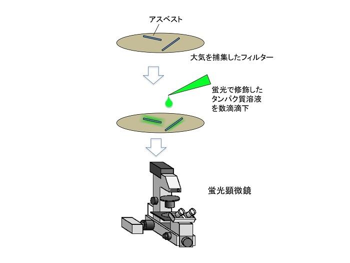 図3 アスベストを蛍光で可視化するまでの操作
