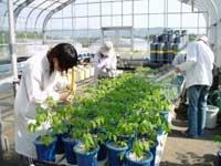 ガラス室での植物の生育調査