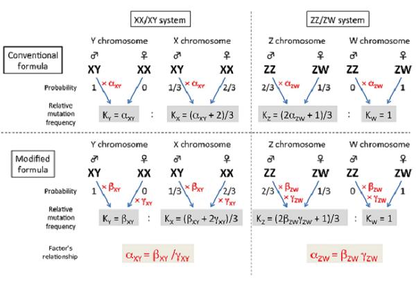 図3. オス駆動進化・相同組換え要因・性染色体上の突然変異との関係式