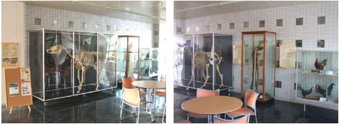 展示スペースの写真