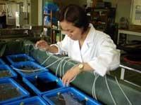 魚類の飼育実験
