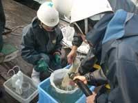 練習船豊潮丸を用いた稚魚の分布生態調査