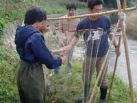河川における放流アユの資源調査