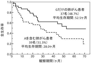肺がん患者の生存率の推移