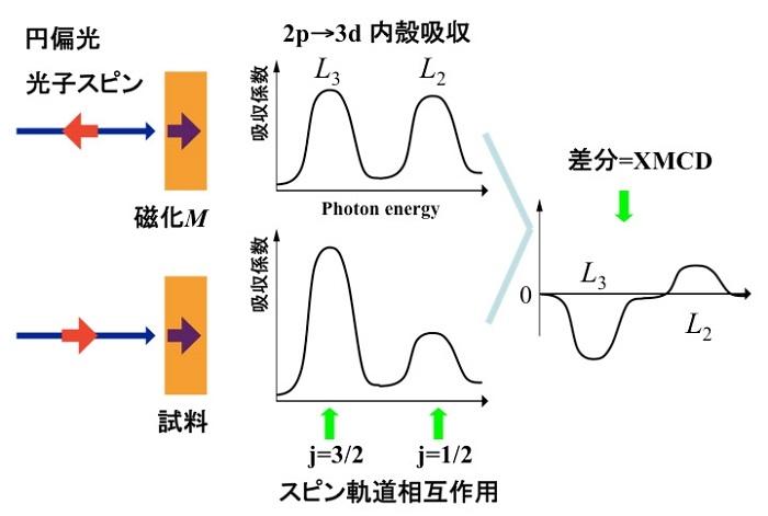 図6:内殻吸収磁気円二色性(XMCD)