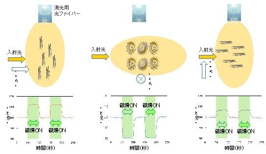 図4 磁場配向した円石集団に対し光を照射し、その反射光の分布を計測する手法。入射光、磁力線、そして観察方向(反射光を測光する向き)の3通りの組み合わせでの測定例を示す。