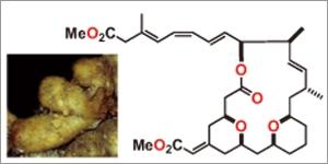 海綿動物から得られた新規抗がん剤候補イグジグオリド