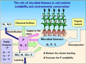 養分供給と環境保全に果たす土壌微生物バイオマスの役割