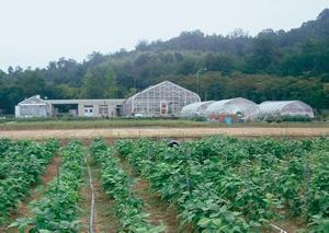 ダイズの栽培と実験圃場