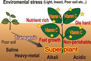 スーパー植物の作出