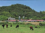 Saijo Station (Research Farm)