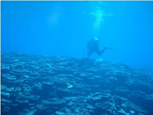 Field research by SCUBA diving in coral reefs