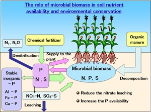 The role of microbial biomass in soil nutrient availability and environmental conservation