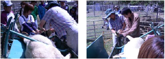 海外畜産実習