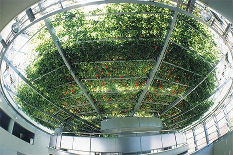 大塚製薬 トマトの木