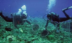 魚類潜水調査の様子
