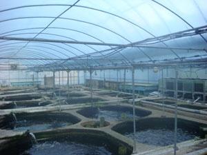 キャンパス内の温室養魚場