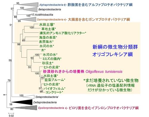 図2 オリゴフレキシア綱(Oligoflexia)を含むプロテオバクテリア門の系統樹