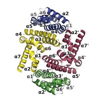 図1:C蛋白質(C末端側半分)とSTAT1末端ドメインの結合体蛋白質結晶構造