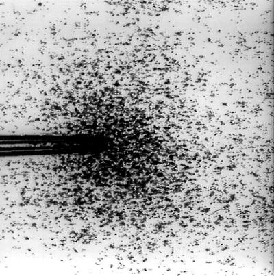 図 細菌の走化性応答